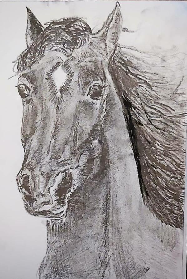 Cavallo-Prima Prova